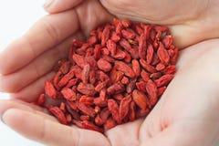Ξηρά κόκκινα μούρα goji στα χέρια στοκ φωτογραφία με δικαίωμα ελεύθερης χρήσης