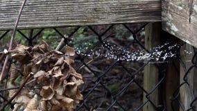 Ξηρά λουλούδια και περίφραξη στη γέφυρα με το spiderweb και τις δροσοσταλί απόθεμα βίντεο