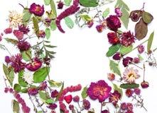 Ξηρά λουλούδια και φύλλα στο πλαίσιο Στοκ Εικόνες