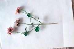 Ξηρά λουλούδια φθινοπώρου σε ένα άσπρο υπόβαθρο Στοκ φωτογραφία με δικαίωμα ελεύθερης χρήσης