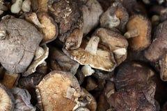 ξηρά μανιτάρια shiitake Στοκ Εικόνες