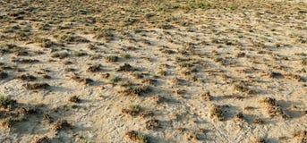 ξηρά μικρή βλάστηση εκτάσεων Στοκ φωτογραφία με δικαίωμα ελεύθερης χρήσης