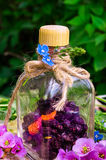 Ξηρά μούρα σε ένα μπουκάλι γυαλιού Στοκ Εικόνα