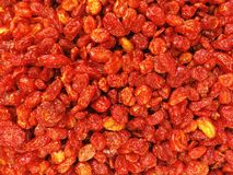 ξηρά ντομάτα Στοκ φωτογραφία με δικαίωμα ελεύθερης χρήσης