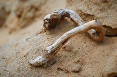 Ξηρά ξύλινη εμπλοκή στην κινηματογράφηση σε πρώτο πλάνο άμμου Στοκ Φωτογραφία