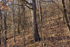 Ξηρά ξύλα Στοκ Φωτογραφίες