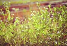 Ξηρά λουλούδια λιβαδιών στοκ εικόνα με δικαίωμα ελεύθερης χρήσης