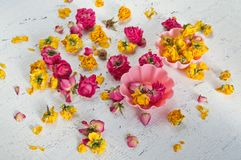 Ξηρά λουλούδια και πέταλα των τριαντάφυλλων Στοκ Εικόνες