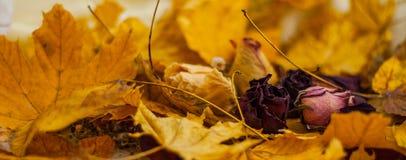 Ξηρά λουλούδια και φύλλα Στοκ εικόνα με δικαίωμα ελεύθερης χρήσης