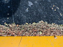 Ξηρά λουλούδια, κλαδίσκοι, ξηρά φύλλα διεσπαρμένα Στοκ φωτογραφία με δικαίωμα ελεύθερης χρήσης
