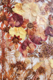 Ξηρά λουλούδια φθινοπώρου Στοκ εικόνα με δικαίωμα ελεύθερης χρήσης