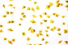 ξηρά λουλούδια χρυσάνθε&m στοκ φωτογραφία με δικαίωμα ελεύθερης χρήσης