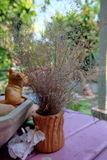 Ξηρά λουλούδια χλόης στοκ εικόνες