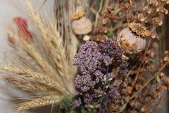 ξηρά λουλούδια Στοκ φωτογραφία με δικαίωμα ελεύθερης χρήσης