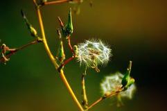 ξηρά λουλούδια Στοκ Εικόνες
