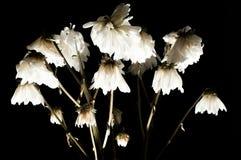 ξηρά λουλούδια Στοκ εικόνες με δικαίωμα ελεύθερης χρήσης