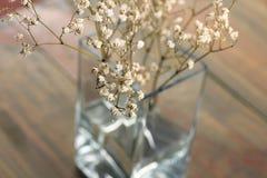 ξηρά λουλούδια Στοκ Φωτογραφία