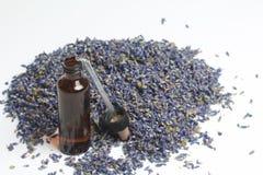 Ξηρά λουλούδια lavender Στοκ Εικόνες