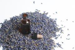 Ξηρά λουλούδια lavender Στοκ Φωτογραφίες
