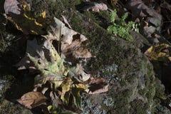 Ξηρά πεσμένα φύλλα στο βράχο στοκ φωτογραφία με δικαίωμα ελεύθερης χρήσης