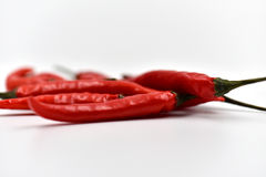 Ξηρά πιπέρια τσίλι που απομονώνονται Στοκ εικόνα με δικαίωμα ελεύθερης χρήσης