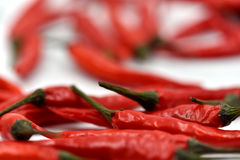 Ξηρά πιπέρια τσίλι που απομονώνονται Στοκ Φωτογραφίες