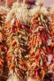 ξηρά πιπέρια τσίλι Στοκ Φωτογραφία