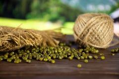 Ξηρά πράσινα mung φασόλια με τη φύση χωρών στοκ φωτογραφία
