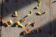 Ξηρά πτώση πετάλων φύλλων το πάτωμα Στοκ φωτογραφίες με δικαίωμα ελεύθερης χρήσης
