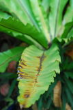 Ξηρά ρυτίδα στο φύλλο του φυτού στοκ εικόνα
