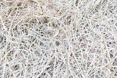 ξηρά σύσταση αχύρου Στοκ Φωτογραφίες