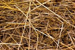 ξηρά σύσταση αχύρου Στοκ Εικόνες
