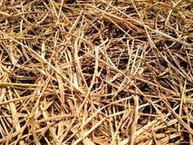 ξηρά σύσταση αχύρου Στοκ Φωτογραφία