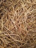 ξηρά σύσταση αχύρου Στοκ Εικόνα
