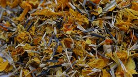 Ξηρά σύσταση λουλουδιών Calendula Marigold ξηρό υπόβαθρο χορταριών Έννοια ομοιοπαθητικής απόθεμα βίντεο