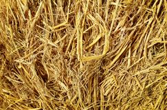 Ξηρά σύσταση υποβάθρου αχύρου, δέματα του αχύρου δημητριακών για την αγελάδα Στοκ εικόνες με δικαίωμα ελεύθερης χρήσης