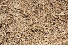 ξηρά σύσταση χλόης ανασκόπη&sig Στοκ φωτογραφία με δικαίωμα ελεύθερης χρήσης