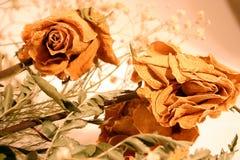 ξηρά τριαντάφυλλα ανθοδεσμών Στοκ Εικόνες