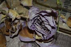 Ξηρά τριαντάφυλλα στον ξύλινο πίνακα στοκ εικόνα με δικαίωμα ελεύθερης χρήσης