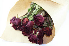 ξηρά τριαντάφυλλα δεσμών Στοκ φωτογραφία με δικαίωμα ελεύθερης χρήσης