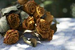 Ξηρά τριαντάφυλλα Στοκ Εικόνες