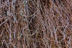 Ξηρά φυτά Υπόβαθρο Στοκ εικόνα με δικαίωμα ελεύθερης χρήσης