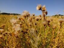 Ξηρά φυτά Στοκ Εικόνες