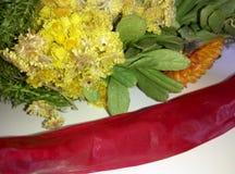 Ξηρά φυτά Στοκ φωτογραφίες με δικαίωμα ελεύθερης χρήσης