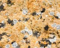 ξηρά φόρμα Στοκ φωτογραφία με δικαίωμα ελεύθερης χρήσης