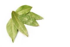 ξηρά φύλλα δαφνών στοκ φωτογραφίες με δικαίωμα ελεύθερης χρήσης