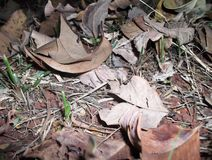 Ξηρά φύλλα στο έδαφος Στοκ Εικόνες