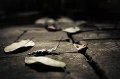 Ξηρά φύλλα στο πάτωμα στοκ φωτογραφία