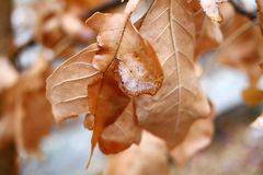 Ξηρά φύλλα φθινοπώρου με τις πτώσεις νερού Έννοια φθινοπώρου εποχής Φυσικό υπόβαθρο ταπετσαριών στοκ εικόνα με δικαίωμα ελεύθερης χρήσης