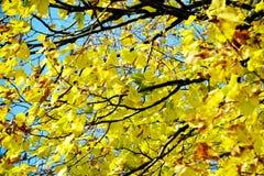 Ξηρά φύλλα χειμερινών δέντρων φθινοπώρου, θολωμένο φυσικό υπόβαθρο φθινοπώρου οικολογίας στοκ φωτογραφία με δικαίωμα ελεύθερης χρήσης